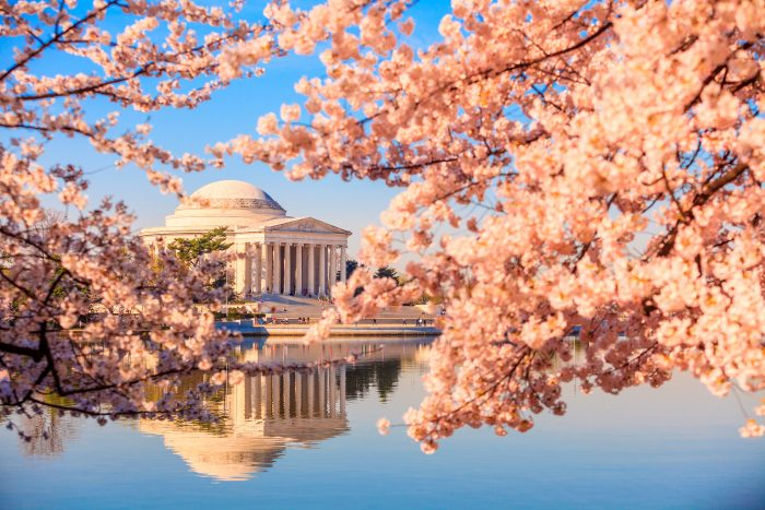 Getting to the Cherry Blossoms